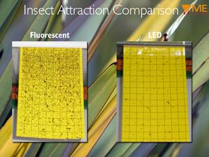 insect-comparison